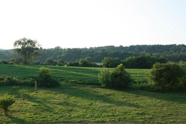 pretty back yard